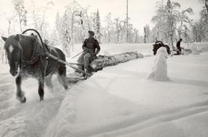 Kajaani Oy 9-  tukkien kuljetus hevosella_pieni (1)