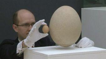 huutokauppa muna