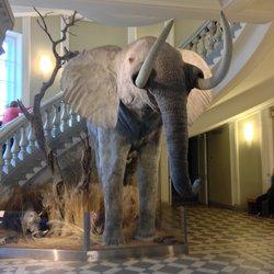 luonnont.museo Elmeri