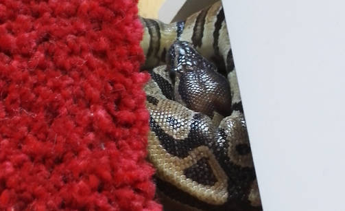 python_etu_hg_060516_503_uu