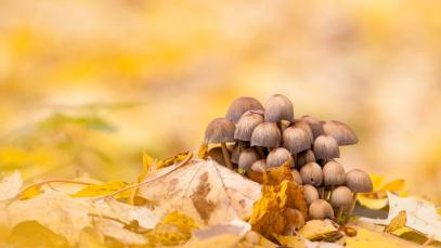 a-kasvit-sienet-ja-vaahteranlehdet-markku-pihlajaniemi