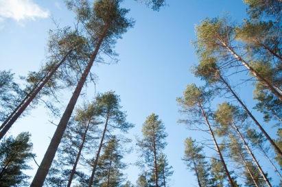 Suomi 100 metsä Teemu Vestovuo