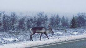 Elsö hó . Annikki Portti fotója