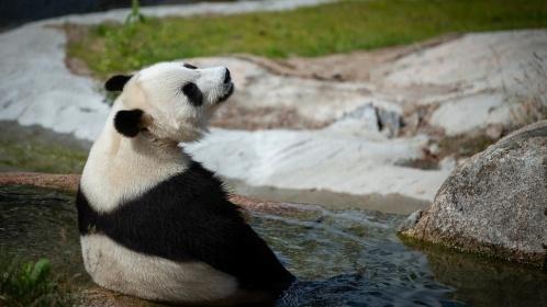 panda-varpaat-ui